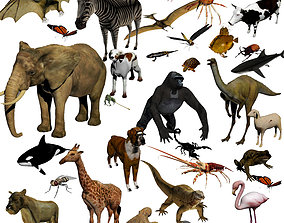 nature ANIMAL COLLECTION 3D model