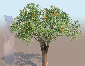 3D model Citrus reticulata mandarin tree young