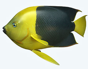 Angle Fish 18 3D model