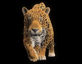 3D asset Jaguar