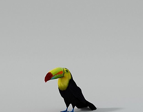 Toucan bird 3D asset