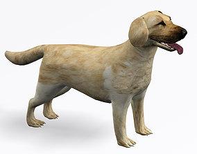 Labrador Retriever 3D