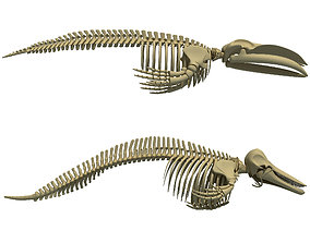 3D Detailed Whale and Dolphin Skeleton