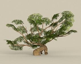 3D model Tree 09
