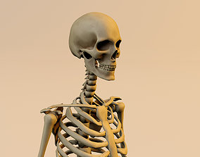 Anatomy skeleton model textured in substance painter 3D