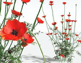 EVERYPlant Field Poppy 07 --20 Models--