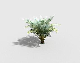 3D asset palm plant