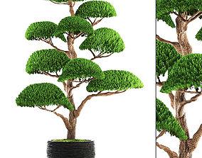 3D topiary bonsai tree