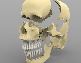 3D Skull Articulated