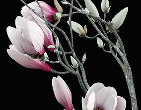 Magnolia 3D