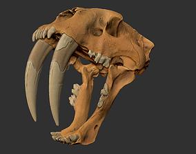 3D print model Smilodon skull