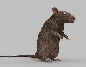 nature 3D rat model