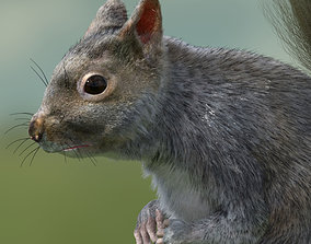 squirrel 3D model animated