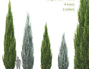 3D model Juniperus scopulorum 02