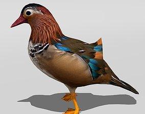 Mandarin Duck 3D asset