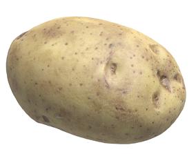 Potato 3D asset