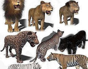 animated Unique Feline Pack - 3d lion model