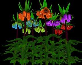 Flower Fritillaria Crown Imperial 3D asset
