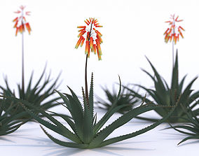 Aloe Vera Flower 3D model