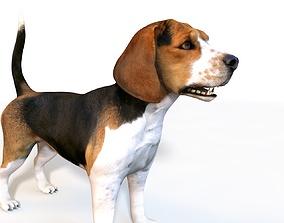 Beagle Dog Rigged 3D
