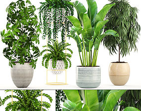 Collection plants tree 3D