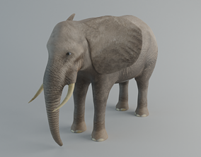 3D asset realtime arses Elephant