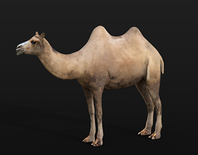 3D model Bactrian Camel Rigged