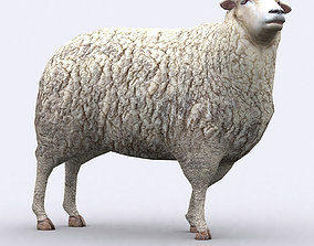 animated 3DRT - Sheep