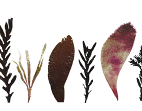 3D model Red and Brown Algae Scanned Texture Pack - 37