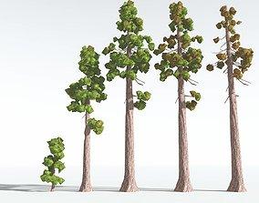 3D asset EVERYPlant Coastal Redwood Cartoon EXT --24