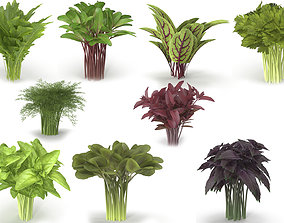 Set of bunches of herbs 3D