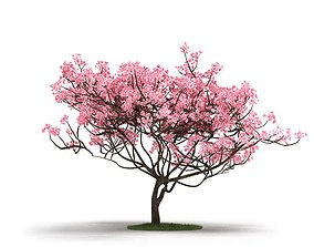 3D Pink Tree On Grass