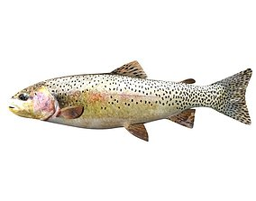 Brown Trout Fish Salmo Trutta 3D