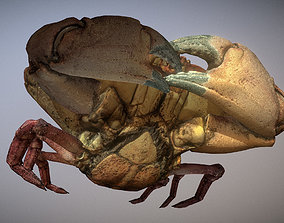 3D model VR / AR ready Scanned photorealistic Crab