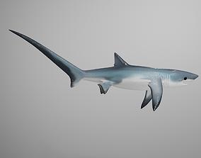 Thresher Shark 3D model