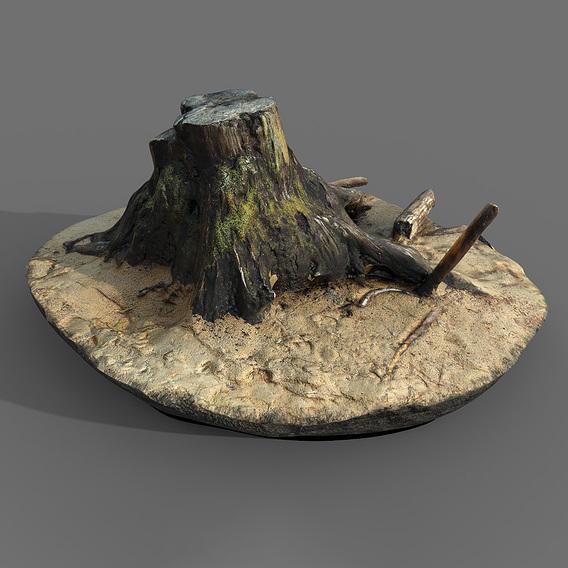 Stump from Karelia 3D SCAN
