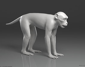 Rhesus Macaque Monkey - Highpoly Sculpture 3D model