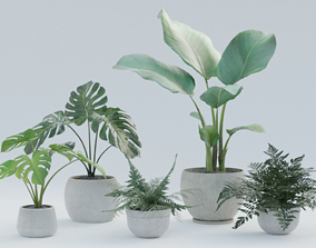 Plant Pack 1 3D model
