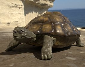 low-poly Turtle low poly for CG model