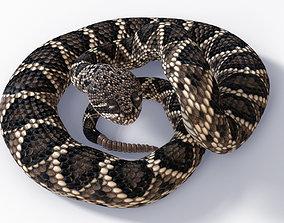 3D asset Animated Eastern Diamondback Rattlesnake