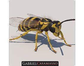 hornet Yellow Jacket Wasp - Vespula Squamosa 3D