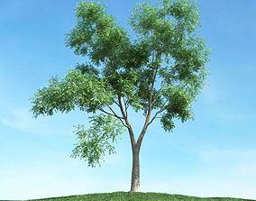 3D model Tall Green Leafed Tree