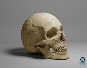 3D model The real skull