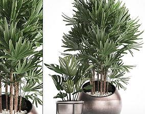 3D model Decorative plants in flower pots 4