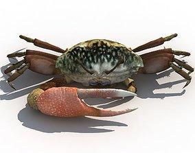 3D model Lake Fiddler Crab
