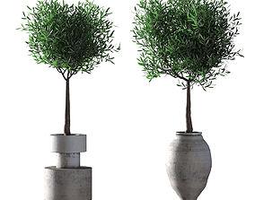 Deciduous olive trees - 2 models