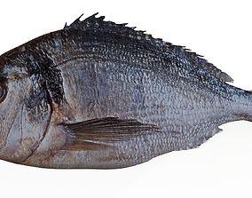 3D Realistic Sea bass