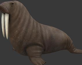 3D model Odobenus rosmarus