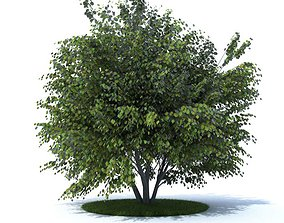 3D model Mature Tree With All Leaves