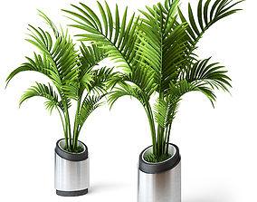 3D Palm Howea 2